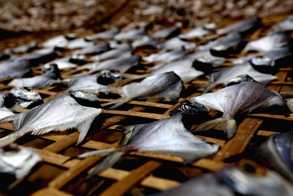 THANBYUZAYAT, March 2, 2019 - Fish are dried in the sun at Kayintaung village, Thanbyuzayat Township, Mon State, Myanmar, March 2, 2019.