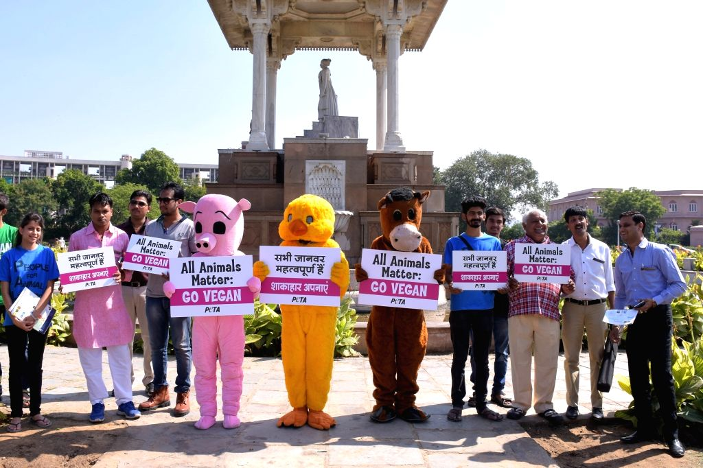 The activist of the People for Ethnic Treatment of Animal`s (PETA) dress as a cow, pig and a chicken during a demonstration ahead of World Vegan Day in Jaipur on Oct 30, 2015.