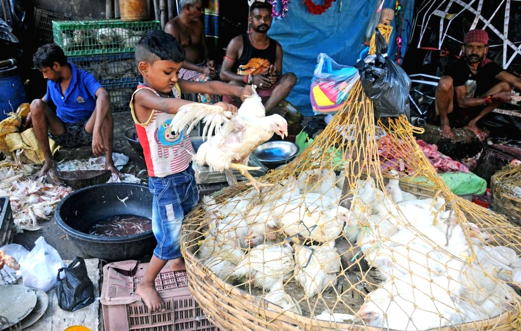 The child plays with hen at a local chicken shop without mask during lockdown on Coronavirus pandemic in Kolkata on Sunday, May 16, 2021.