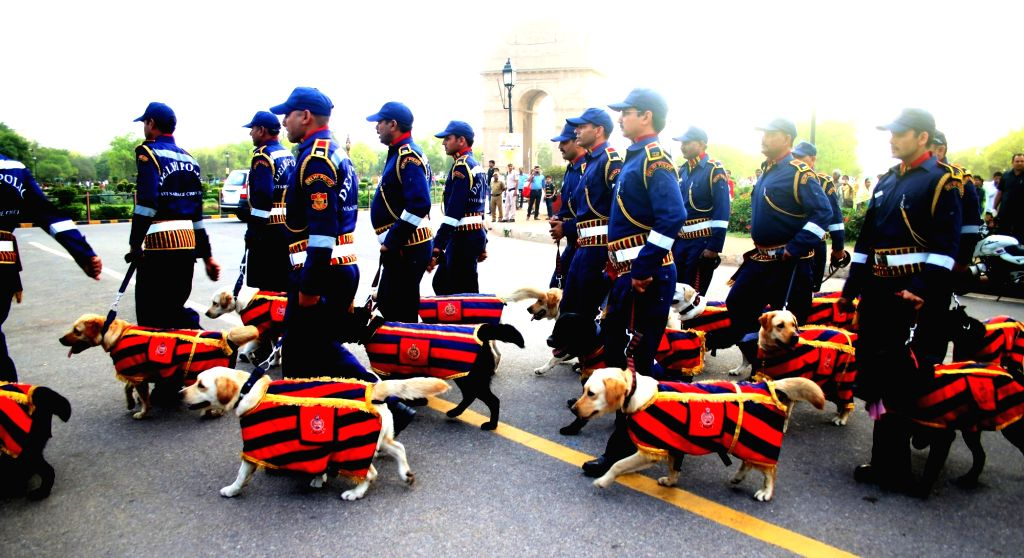 The newly inducted Labrador Retriever dogs who have been inducted in Delhi Police's dog squad at India Gate in New Delhi, on April 4, 2016.