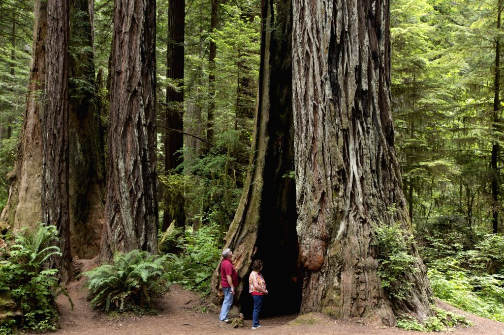 The Redwood National and State Parks (RNSP) are located in the United States, along the coast of northern California. Comprising Redwood National Park (established 1968) and California's Del Norte ...