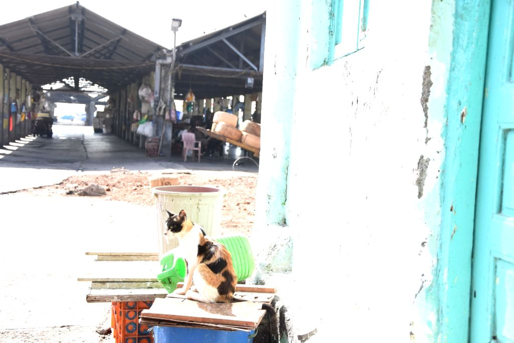 The Sassoon Dock sea food market bears a deserted look during nationwide shutdown - Janata Curfew - called by Prime Minister Narendra Modi as a measure to contain the spread of COVID-19, in ... - Narendra Modi