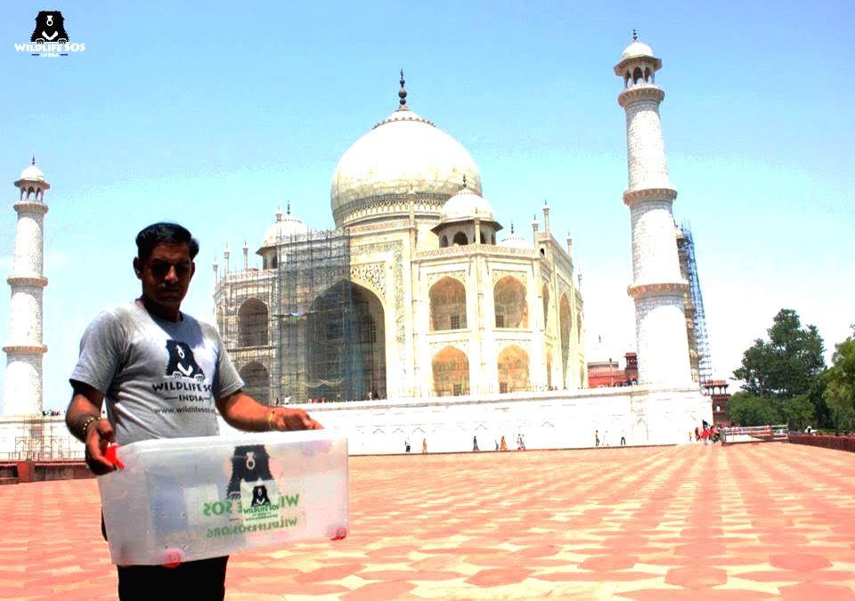 Thirsty snake triggers panic at Taj Mahal