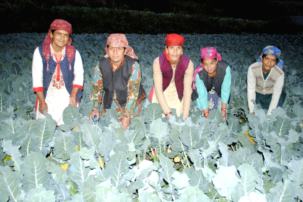 Thousands of farmers, particularly the women, have adopted the Subhash Palekar Prakritik Kheti Khushhal Kisan scheme under the state government by growing vegetables and other crops through natural farming -- both individually and by forming self-hel