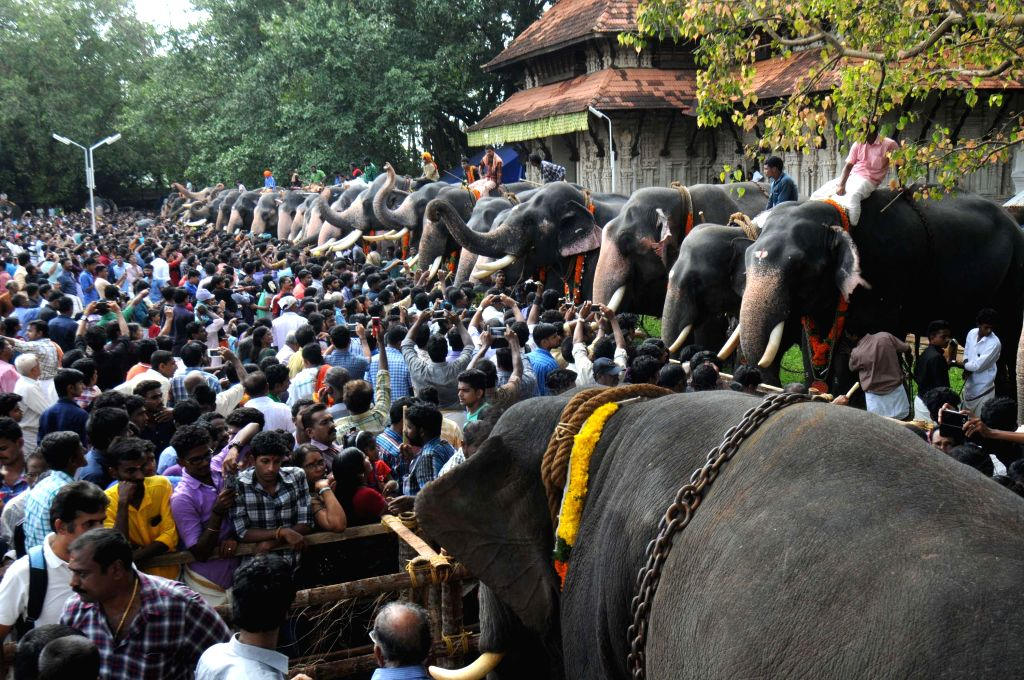Thrissur: Elephants being fed at the Vadakkunnathan Temple in Thrissur of Kerala on July 17, 2015. (Photo: IANS)