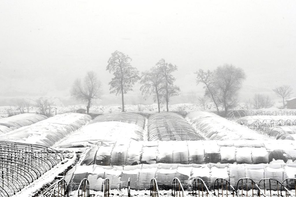 TIANSHUI, March 12, 2017 - Photo taken on March 12, 2017 shows snow-covered greenhouses in Tianshui City, northwest China's Gansu Province.