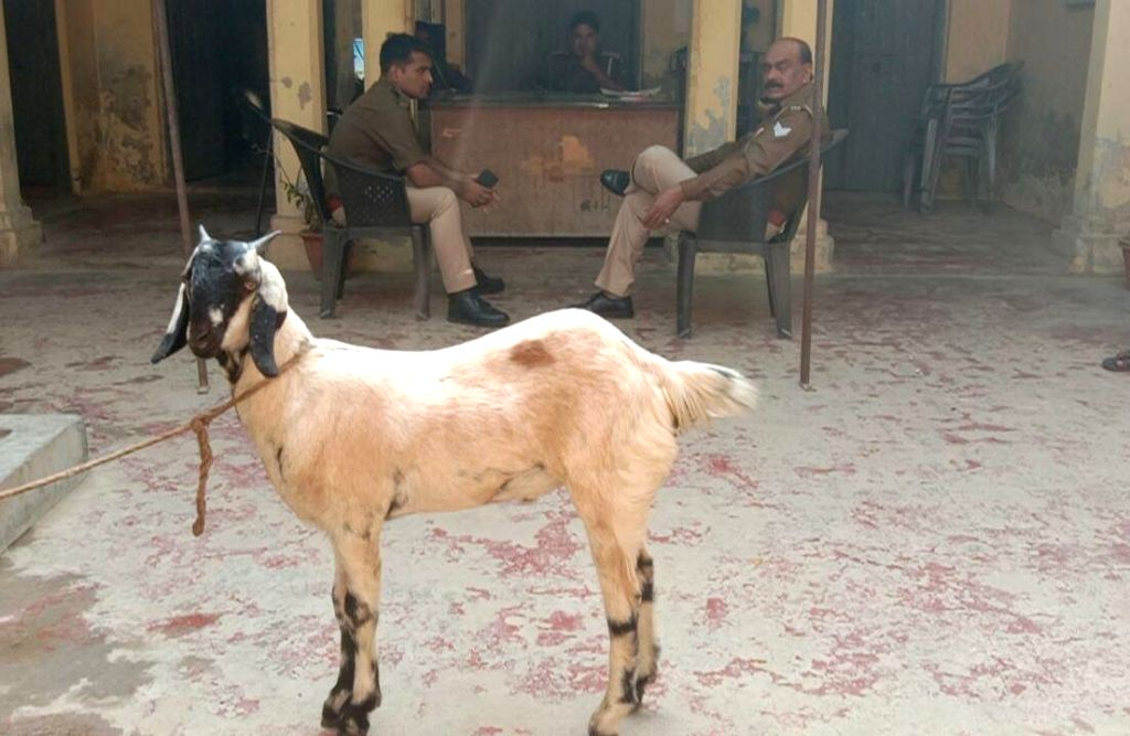 Tied the goat in the police post itself.