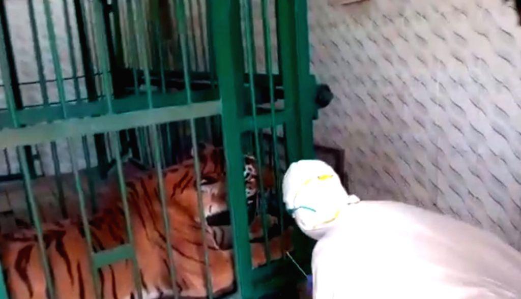 Tigress dies in Aurangabad zoo, swab sent for Covid-19 test.