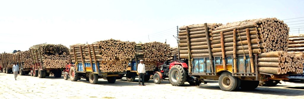 Timber. (File Photo: IANS)