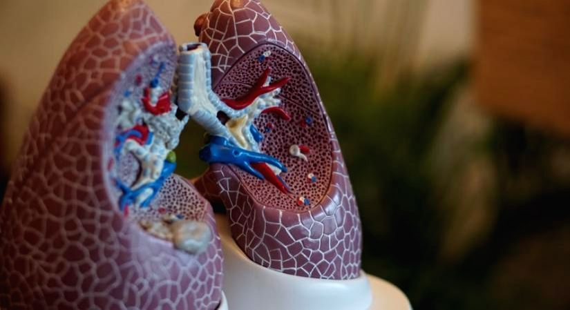 Tips to boost lung immunity.