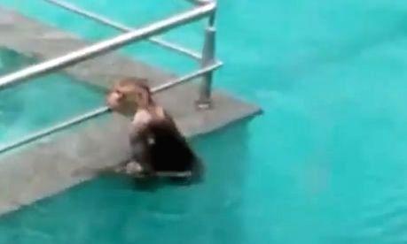 Tisca Chopra shares video of monkeys having 'pool party'. - Tisca Chopra