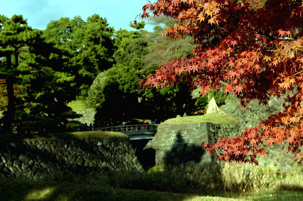 Tokyo (Japan): Photo taken on Dec. 5, 2014 shows the autumn view at the Imperial Palace in Tokyo, Japan.