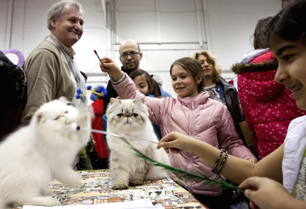 Visitors play with cats during the 2014 All About Pets Show in Toronto, Canada, April 18, 2014. Featuring everything from cats and dogs, to horses, fish, and even .