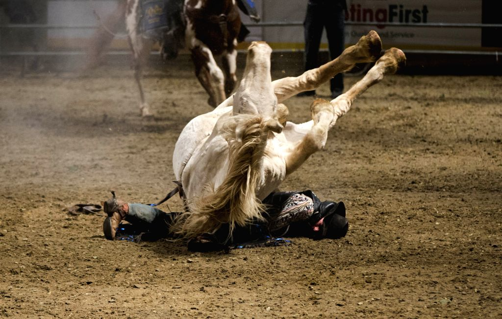 Toronto (Canada): Cowboy Trevor Van Alstine falls from his horse during the Rodeo section of the 2014 Royal Horse Show at Ricoh Coliseum in Toronto, Canada, Nov. 9, 2014. Over 40 riders from the ...