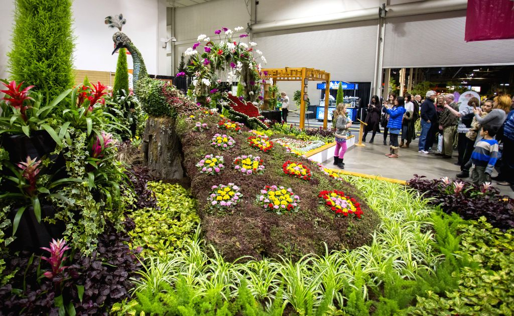 TORONTO, March 12, 2017 - People visit the 2017 Canada Blooms exhibition in Toronto, Canada, March 12, 2017. As Canada's largest flower and garden festival, the 10-day event kicked off on Friday ...
