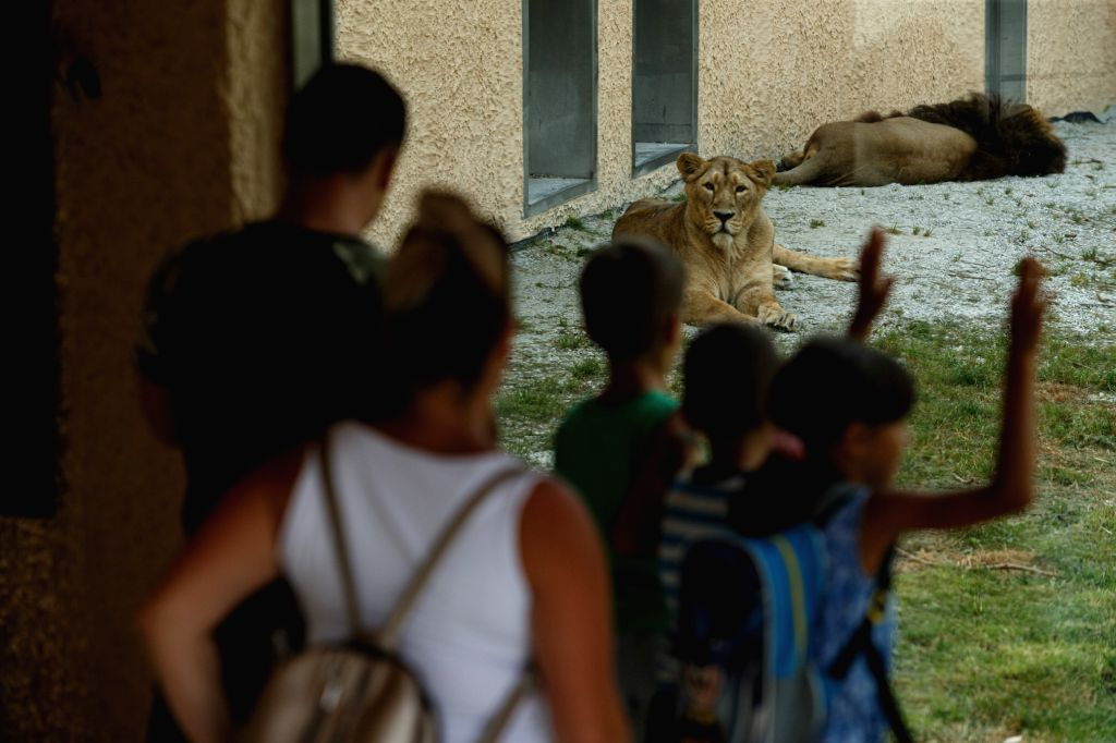 Tourists look at lions in Ljubljana Zoo in Ljubljana, Slovenia, Aug. 11, 2020. Tourists gradually return to Ljubljana Zoo, which was closed for a while due to the ...