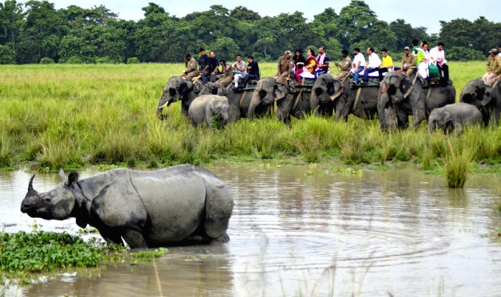 Tourists riding on elephants watch a one-horned rhinoceros during an elephant safari in Kaziranga national park in Assam on Oct 1, 2016. The world famous Kaziranga National Park has ...
