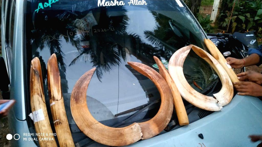 Transcontinental 60-year history behind rare hippo ivory in K'taka.