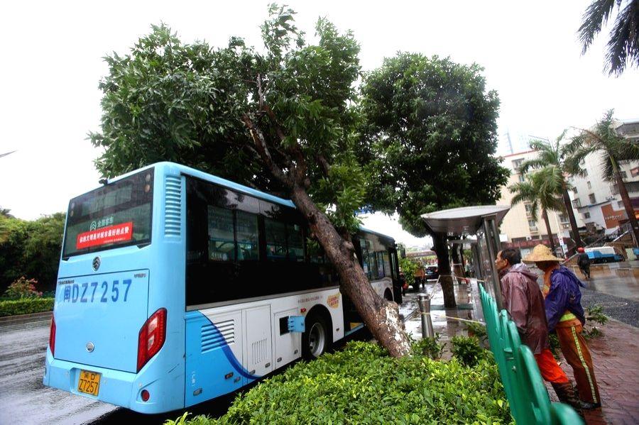 Trees are seen in strong winds brought by Typhoon Mekkhala in Zhangpu County of Zhangzhou, southeast China's Fujian Province, Aug. 11, 2020.