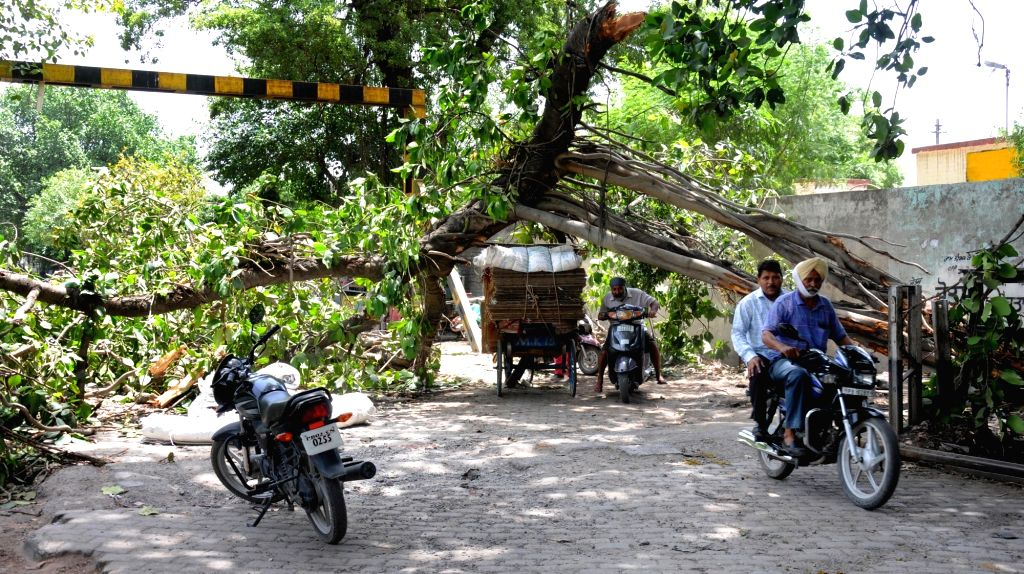 Trees that fell during  a storm that hit Amritsar last night block roads on May 30, 2016.