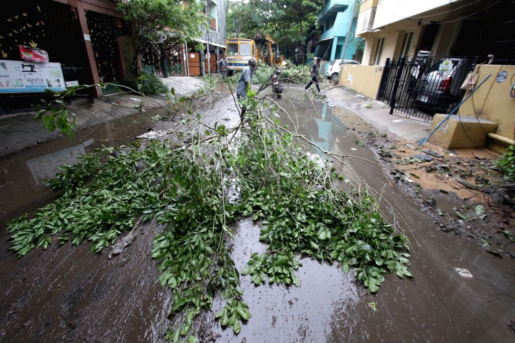 Trees uprooted in Chennai being cleared after Cyclonic storm Nivar wreaked havoc in Tamil Nadu, on Nov 27, 2020.