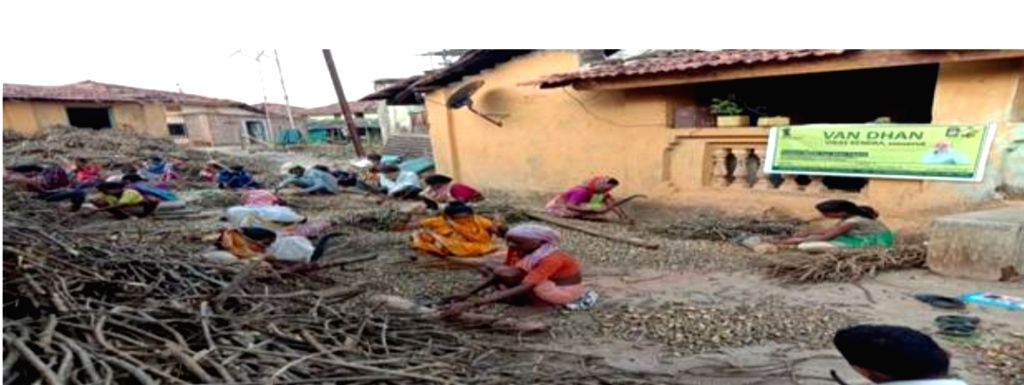Tribal start-up in Maha that employed 300 tribals, sold 18.50 lakh 'Giloy' in 17 months.