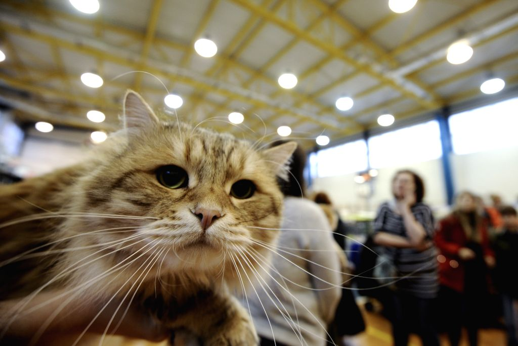 Two pet cats in New York test positive for COVID-19 (2020-04-23 04:36:12)