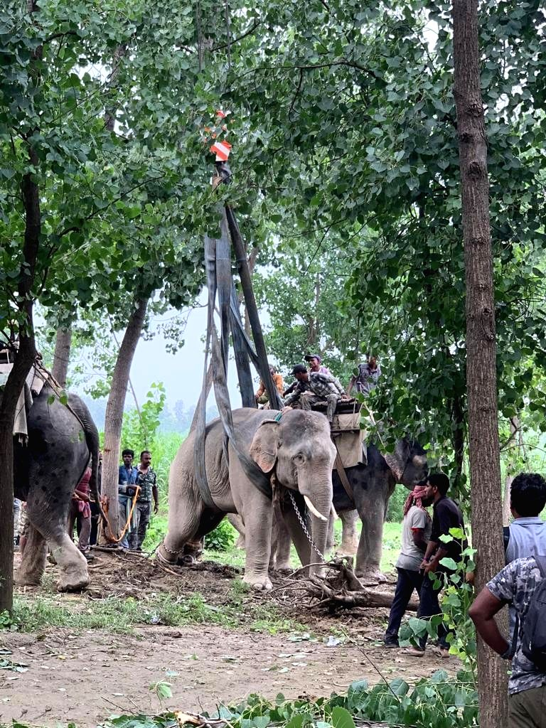 Two wild tuskers, stranded in a town in Uttar Pradesh's Rohilkhand region who had sent forest officials on a wild goose chase for the past almost three and a half weeks, have finally been ...