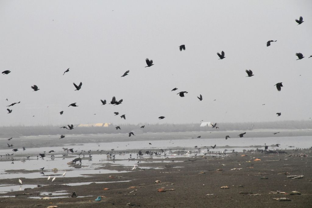 Birds fly over the channel of the Ganga river in Unnao district of Uttar Pradesh where 104 human bodies were recovered on 14th January 2015. The recovery of bodies from the Ganga has caused ...