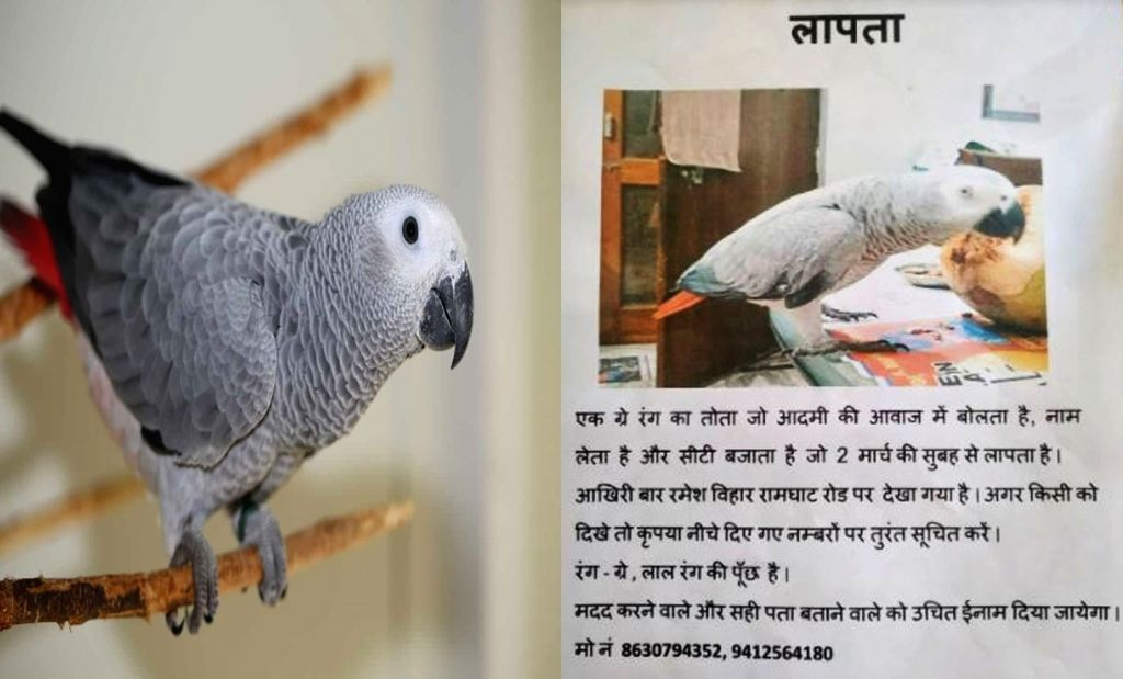 UP Police now hunt for missing parrot