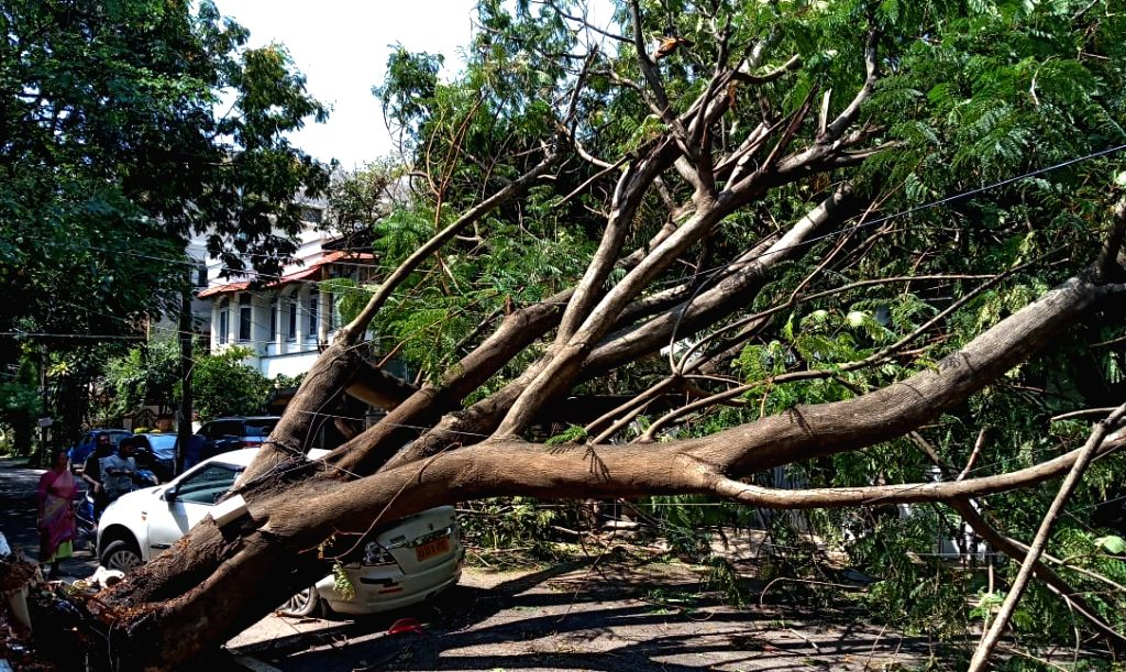 Uprooted trees block a street after heavy rains lashed Bengaluru last night, on May 27, 2019.