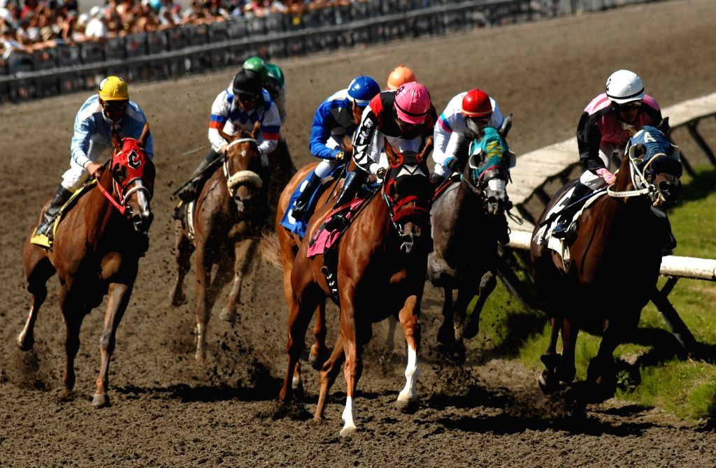 Horses ridden by jockeys compete in the 2014 BC Cup horse racing at Hastings Park racecourse in Vancouver, Canada, Aug. 4, 2014. It is one of Canada's biggest Best