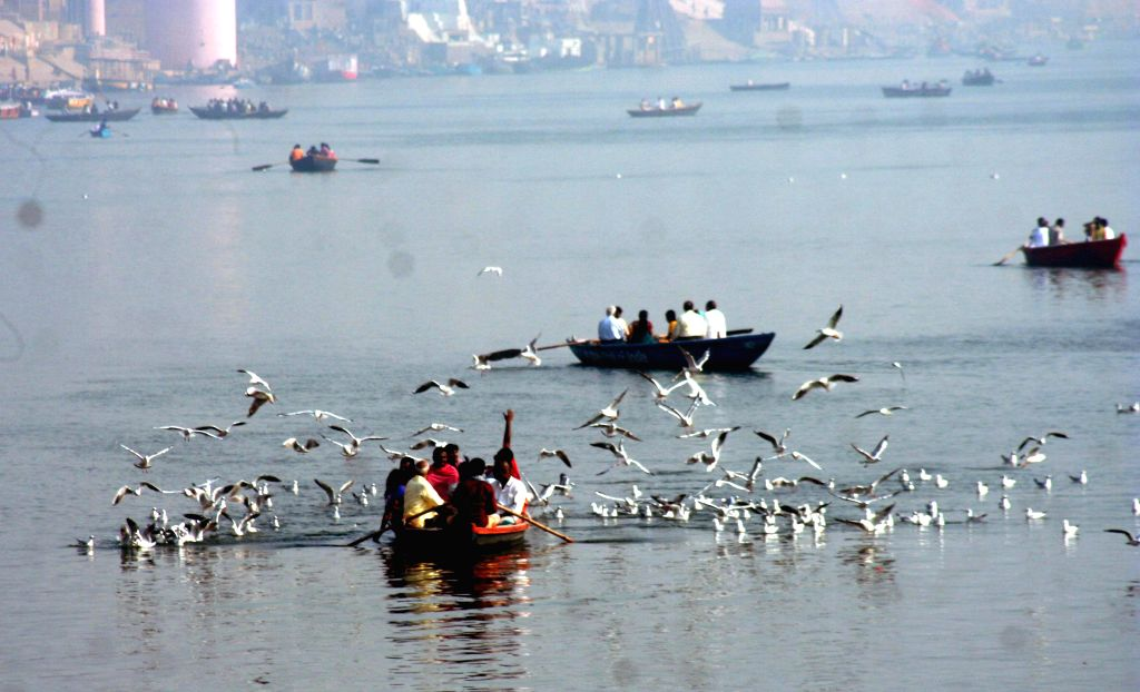 Migratory birds from South Africa and other countries fly above the Ganga river in Varanasi, on Nov 12, 2014.