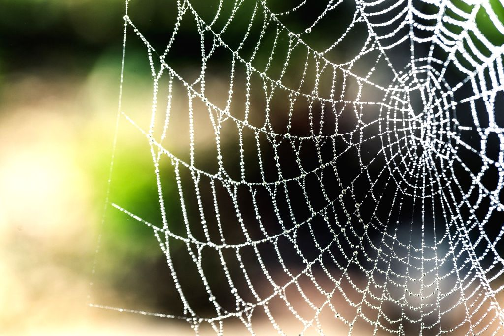 Vegan spider silk a sustainable alternative to single-use plastics. (Credit : Pixabay.com)