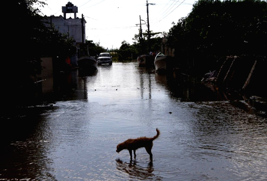 VERACRUZ, Sept. 10, 2017 - A dog is seen in a flooded street in Tecolutla, Veracruz state, Mexico, Sept. 9, 2017. Tropical storm Katia left at least two people dead in Mexico's Gulf Coast state of ...