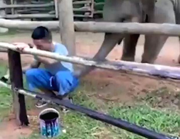 Video of baby elephant playing with man goes viral.