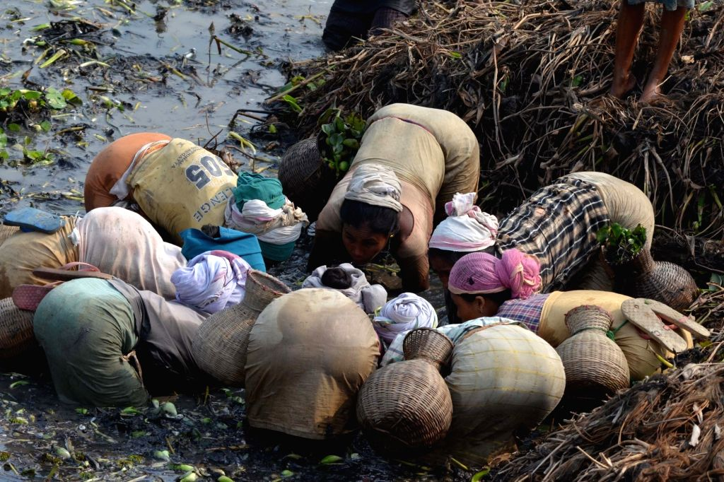 Villagers participate in community fishing as they celebrate Magh Bihu at Borkula Lake in Nagaon of Assam on Jan 14, 2016. The festival that is celebrated on the first day of 'Magh' month of ...