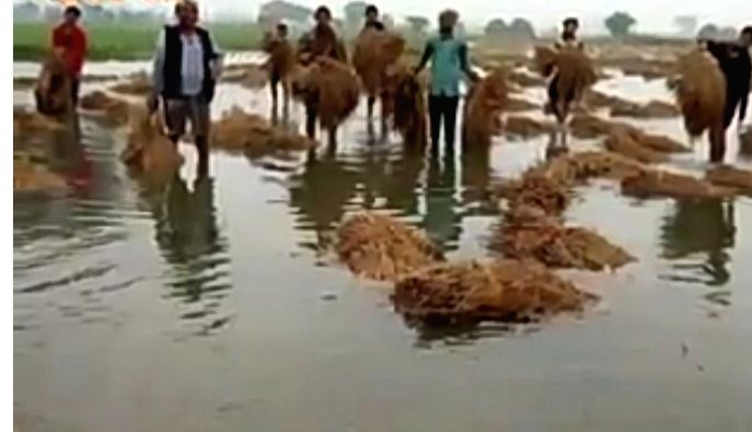 Vimal Sharma, the central president of the Bundelkhand Farmers Union, said on Friday that 'about two hundred bigha crops of farmers have been destroyed due to the canal derailment in Naraini and ... - Vimal Sharma