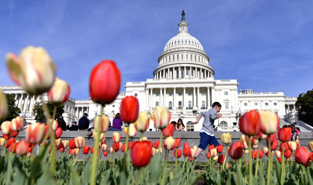 Visitors view tulips in blossom in front of the Capitol building in Washington D.C., the United States, April 17, 2014.