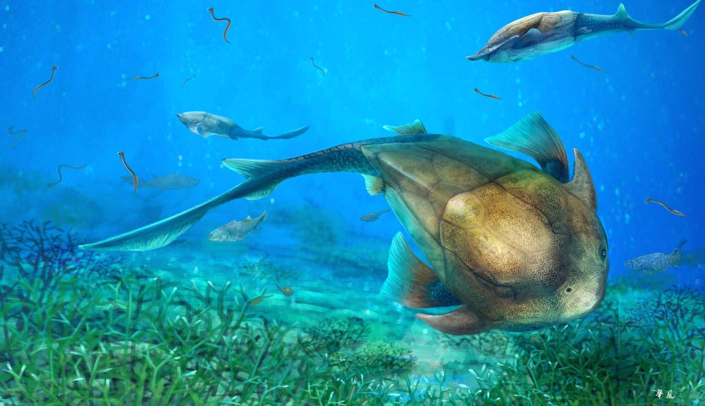 WASHINGTON D.C., Oct. 20, 2016 - This illustration shows Qilinyu, a 423-million-year-old fish from the Kuanti Formation (late Ludlow, Silurian). Paleontologists from China and Sweden said Thursday ...