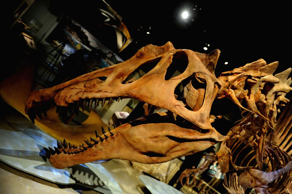 "An exhibition ""Spinosaurus: Lost Giant of the Cretaceous"", featuring a life-sized skeletal model of Spinosaurus, is unveiled at National ..."