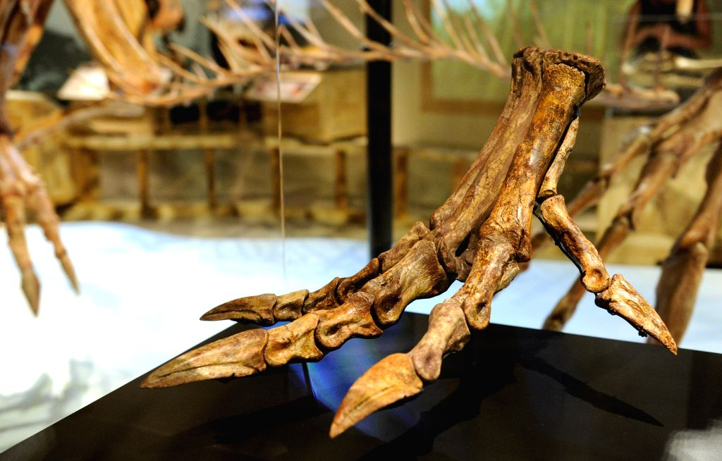 "The real bone claw of Spinosaurus aegyptiacus is showed on an exhibition ""Spinosaurus: Lost Giant of the Cretaceous"", featuring a life-sized ..."