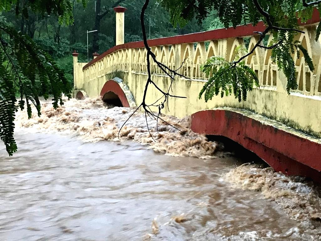 Water from Mithi river floods Sanjay Gandhi National Park in Mumbai's Borivali East on Aug 3, 2019.