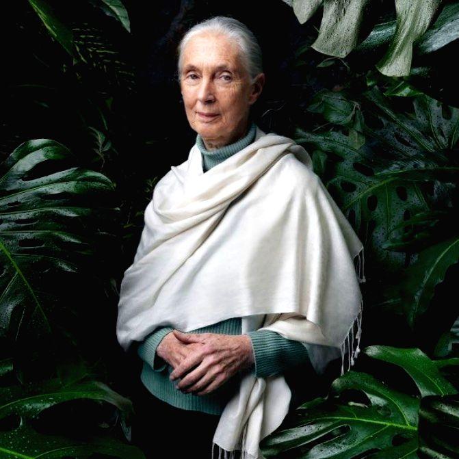 We've been disrespectful of nature: Jane Goodall on COVID-19. (Photo Courtesy: janegoodallinst/Instagram)