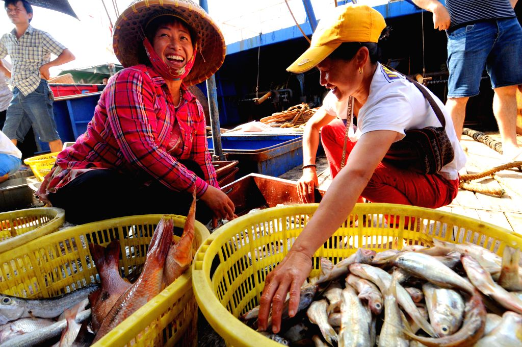 People sort out their catch at the Qinglan port in Wenchang, south China's Hainan province, May 16, 2014. The two-and-half-month summer fishing moratorium lasts ...