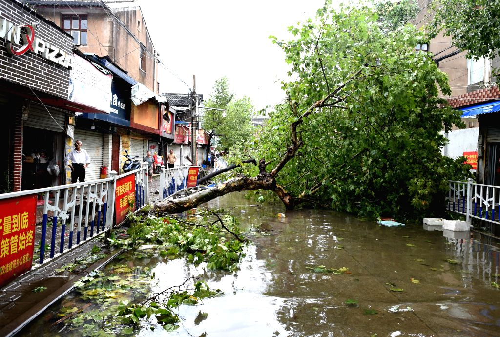 WENLING, Aug. 10, 2019 (Xinhua) -- Photo taken on Aug. 10, 2019 shows a tree leveled by Typhoon Lekima in Wenling, east China's Zhejiang Province, Aug. 10, 2019. At around 1:45 a.m., the center of Typhoon Lekima, the ninth typhoon of the year, made l