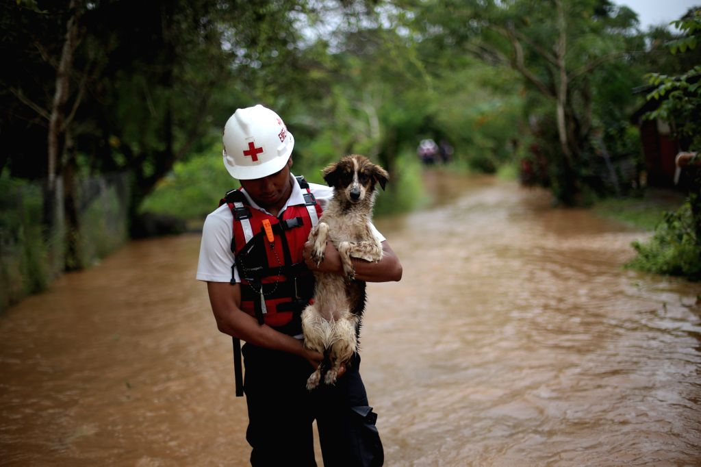 WEST PANAMA, Nov. 23, 2016 - A Red Cross member takes part in a rescue operation in La Chorrera, West Panama province, Panama, Nov. 22, 2016. According to local press, the tropical storm Otto became ...