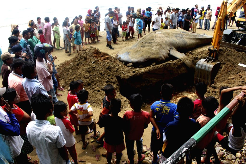 WEST SUMATRA, Oct. 8, 2019 - People watch as an excavator buries the body of a dead whale shark which stranded at Taluak Batuang beach in West Sumatra, Indonesia, Oct. 8, 2019.