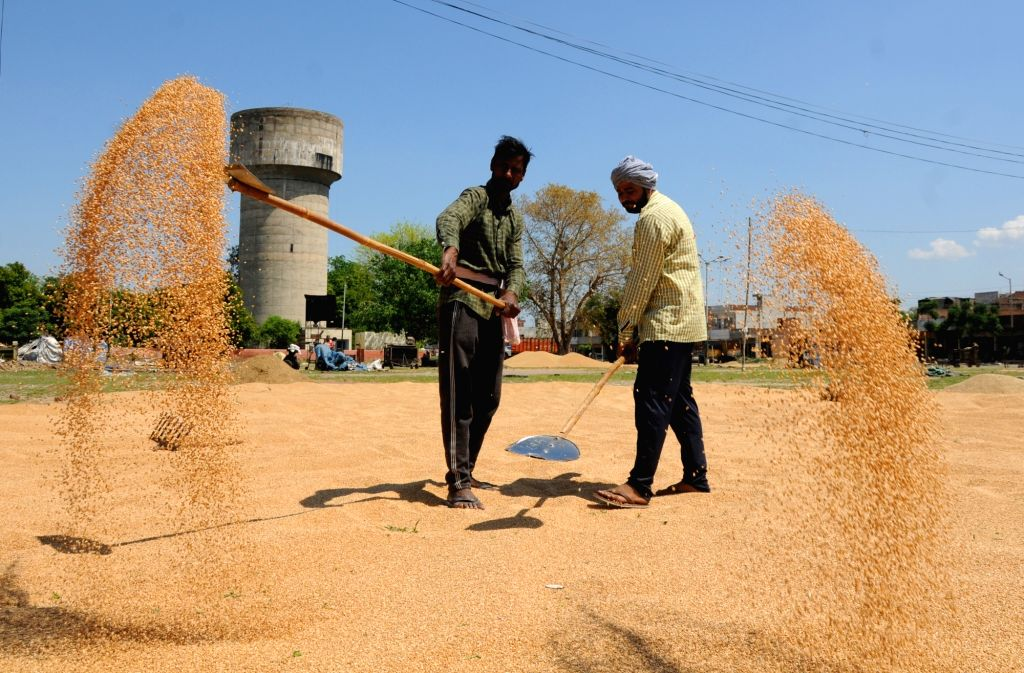 Wheat harvesting in full swing in Punjab, Haryana, near to finish elsewhere