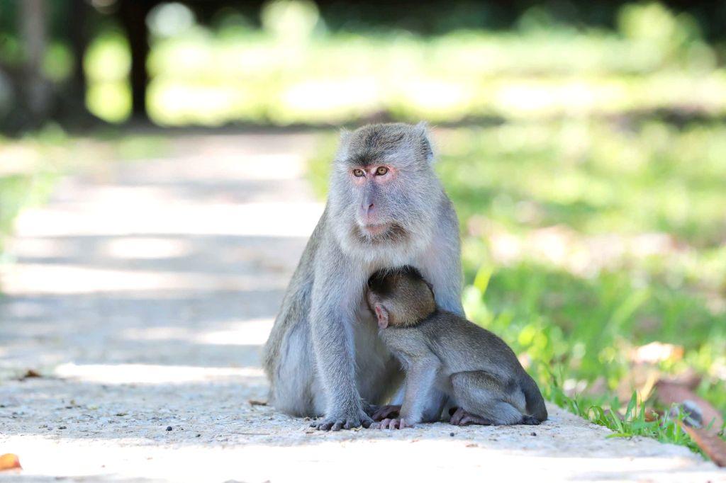 Wildlife population declined by 68% since 1970: WWF. (Xinhua/Zhu Wei/IANS)
